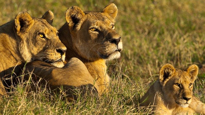 Safari en campement itinérant, Safari au Botswana © Laurent Guillot