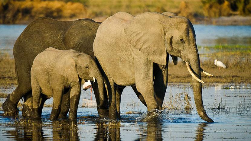 Parc national de Chobe, Safari sur la rivière Chobe, Botswana