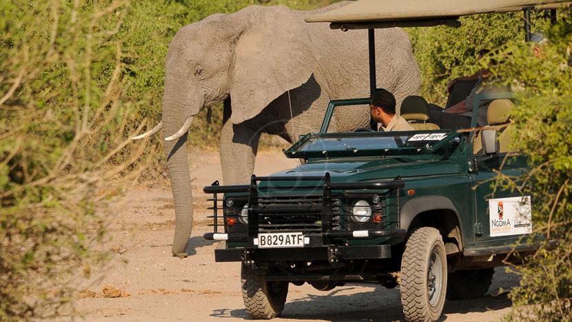 Parc national de Chobe, Ngoma Safari Lodge à Chobe, Botswana