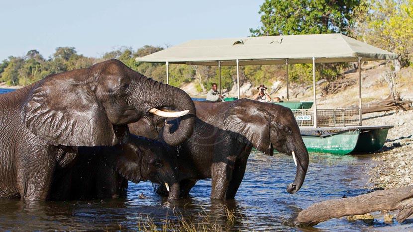 Parc national de Chobe, Chobe Savanna Camp, Botswana