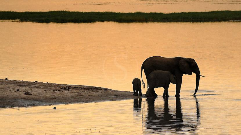 La rivière Chobe, Campement itinérant, Botswana