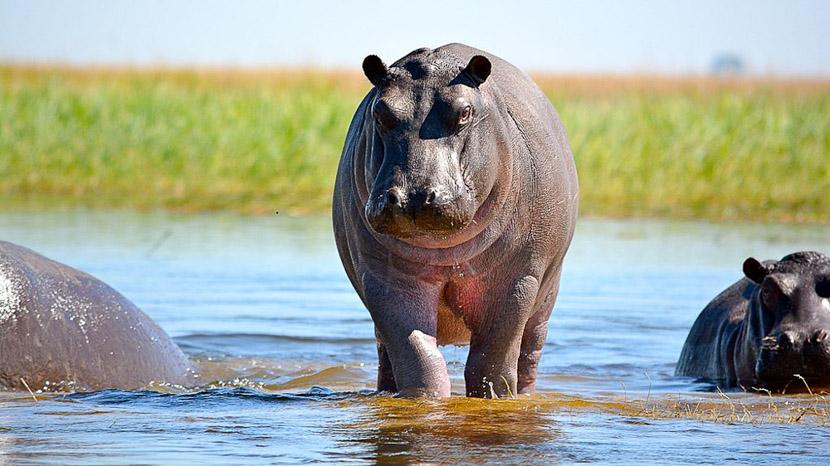 La rivière Chobe, Voyage en Afrique Australe © Benoit P.