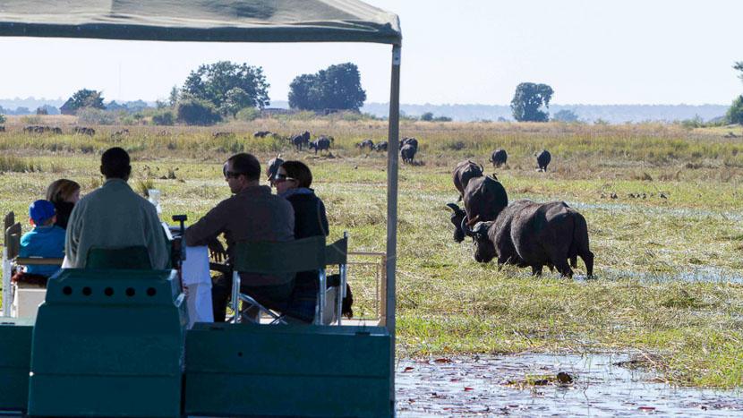 Safari en bateau sur la rivière Chobe, Chobe Savanna Camp, Botswana