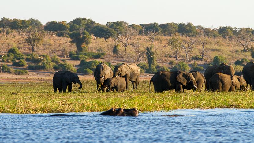 Chobe, safari sur l'eau !,
