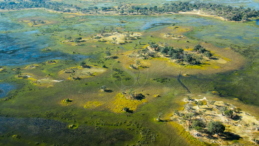 Delta de l'Okavango,