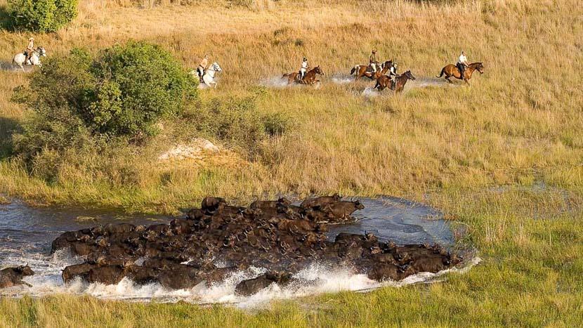 Delta de l'Okavango, Xaranna Delta Camp, Botswana © &Beyond