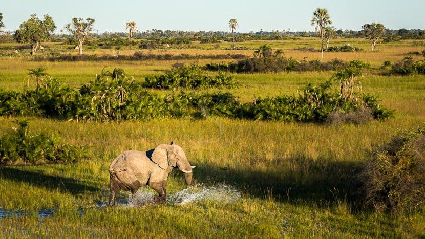 Delta de l'Okavango, Jao Camp, Delta de l' Okavango © Wilderness Safaris