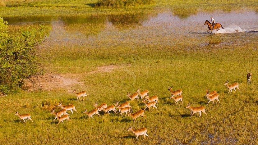 Delta de l'Okavango, Safari à cheval dans le Delta de l'Okavango