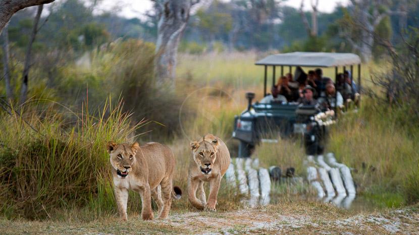 Safari en 4x4 dans le delta de l'Okavango, Safari dans le Delta de l'Okavango © L. Guillot