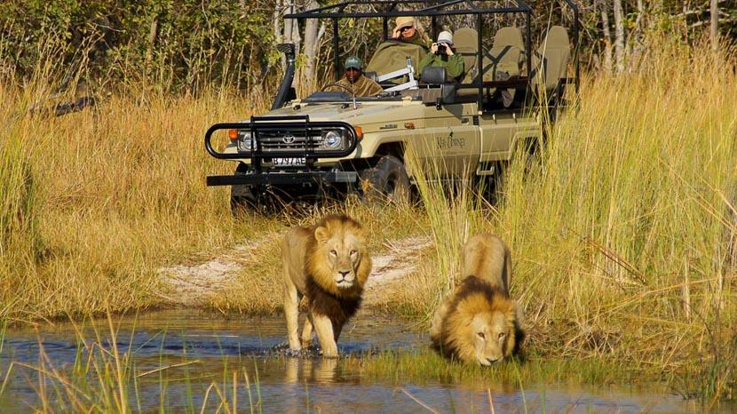 Safari en 4x4 dans le delta de l'Okavango, Okuti Camp dans le Delta de l'Okavango, Botswana