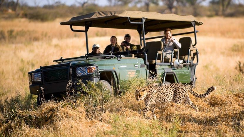 Safari en 4x4 dans le delta de l'Okavango, Selinda Camp, Botswana © Beverly Joubert