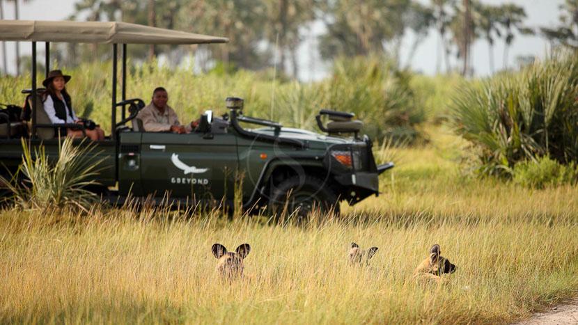 Safari en 4x4 dans le delta de l'Okavango, Nxabega Camp, Delta de l'Okavango © &Beyond