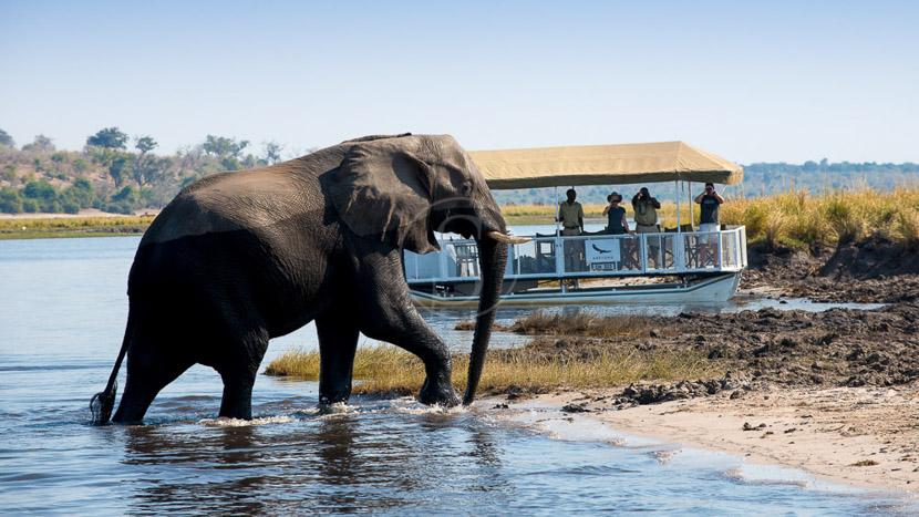 Rencontre avec les éléphants dans le Delta , Safari &Beyond au Botswana