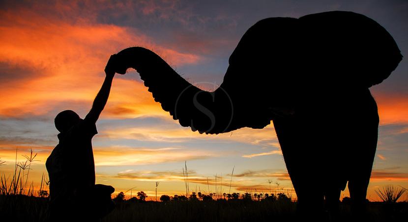 Rencontre avec les éléphants dans le Delta , Baine's Camp, Botswana