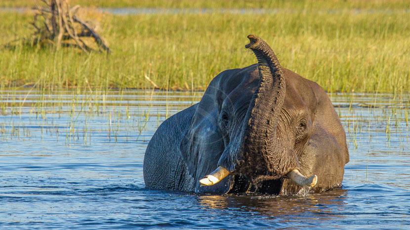Rencontre avec les éléphants dans le Delta , Leroo la Tau Camp, Botswana
