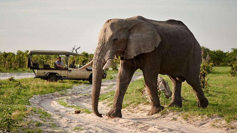 Rencontre avec les éléphants dans le Delta , Khwai River Lodge, Botswana