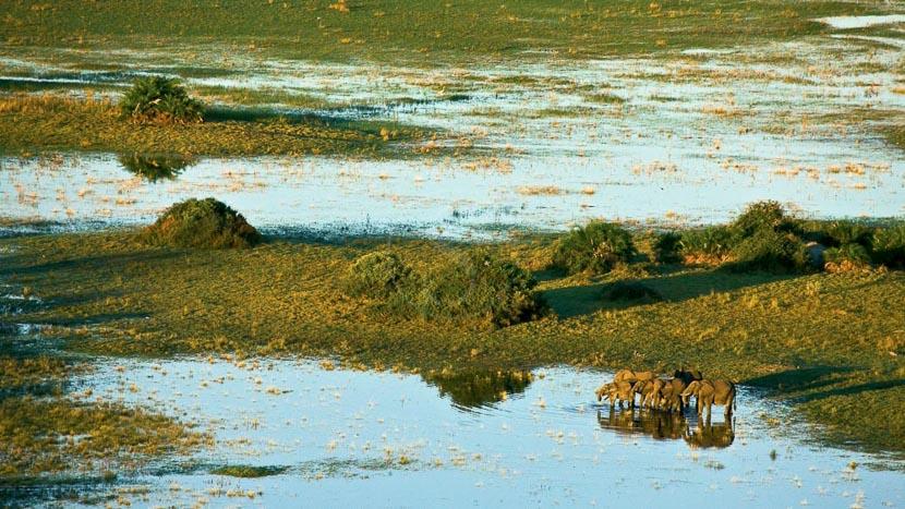 Safari en hélicoptère à Linyanti, Selinda Camp, Botswana © Beverly Joubert