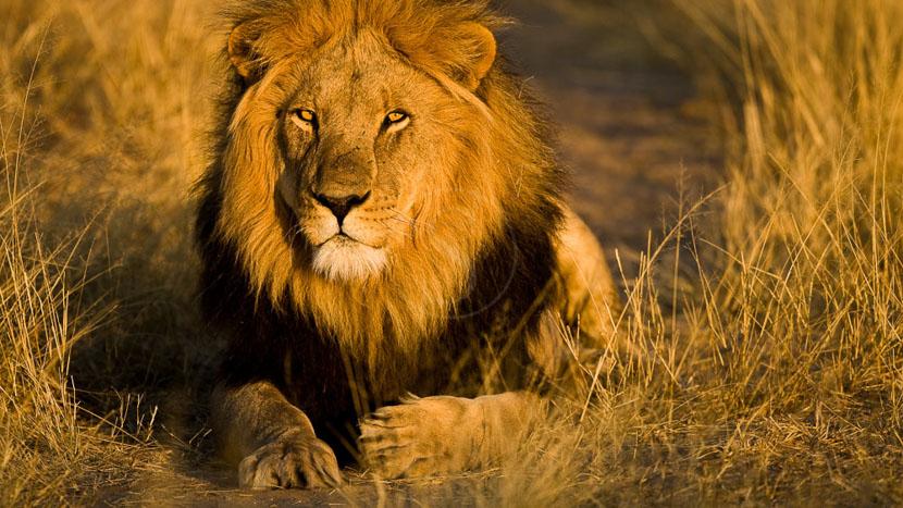 Réserve animalière du Kalahari central, Gassland Lodge, Botswana © C. Courteau