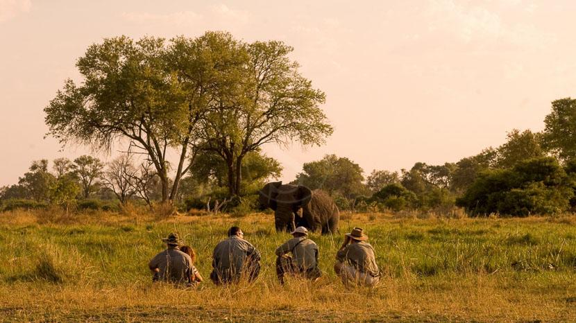 Réserve communautaire de Khwai, Khwai Tented Camp, Botswana