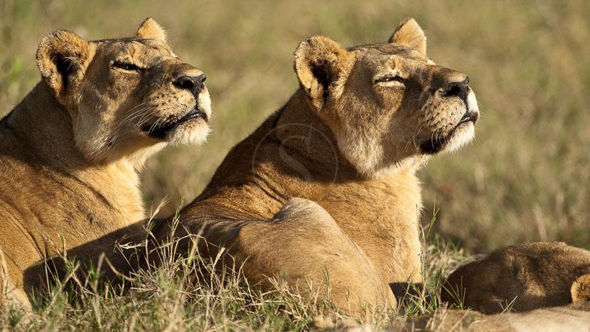Linyanti, Safari au Botswana © Laurent Guillot