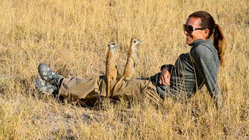Suricates au pan de Makgadikgadi, San Camp, Botswana