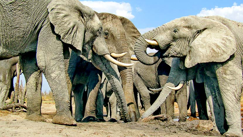 Expérience au Hyena Pan Camp, Hyena Pan Camp, Botswana © Natural Selection