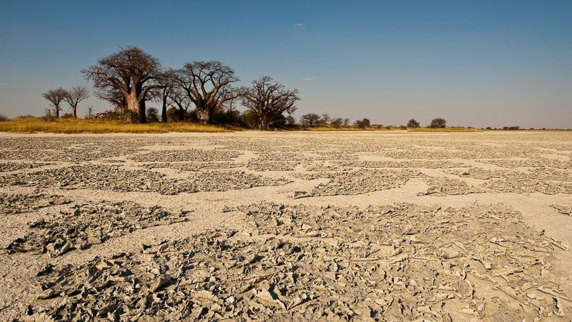 Parc national de Nxai Pan, Safari au Botswana © Laurent Guillot