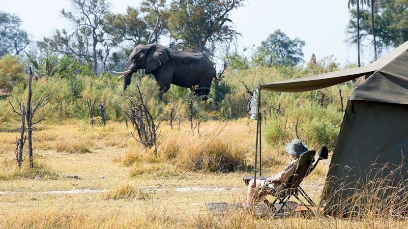 Savute, Safari &Beyond au Botswana