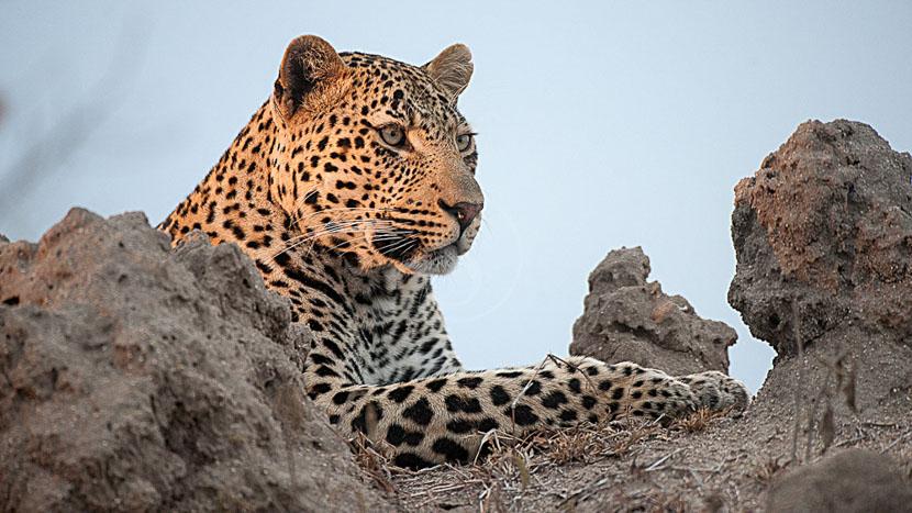 Savute, Safari au Botswana © Alain Pons