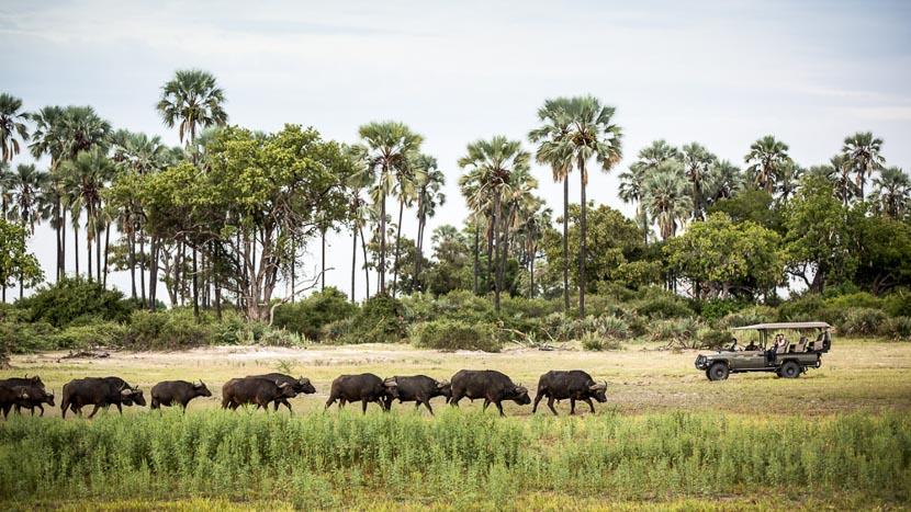 Safaris à Mombo Camp, Mombo Camp, Botswana © Wilderness Safaris