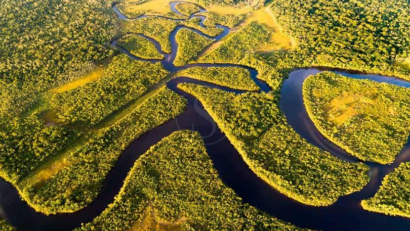 Amazonie, Forêt Amazonienne, Brésil