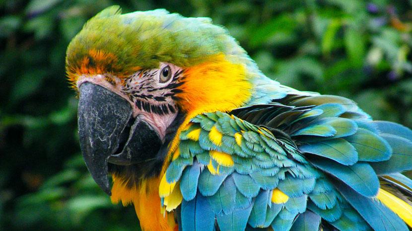 Parc aux oiseaux, Forêt Amazonienne, Brésil © Shutterstock