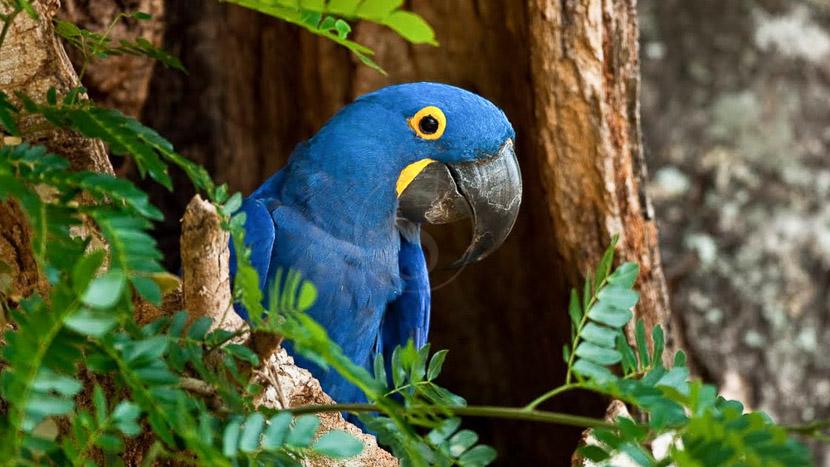 Parc aux oiseaux, Pantanal, Brésil © Christophe Courteau