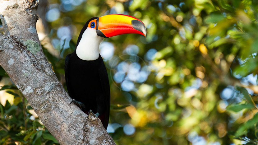 Parc aux oiseaux, Safari au Pantanal, Brésil © Michel Denis-Huot