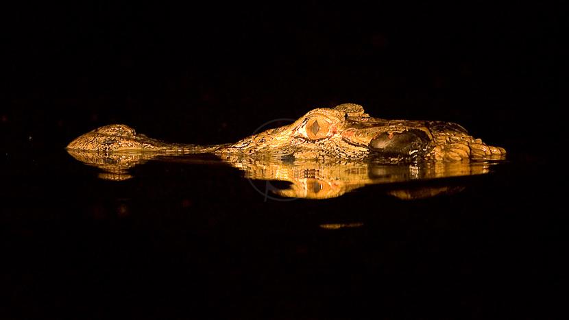 Croisière photo en Amazonie accompagnée par Christophe Courteau, Pantanal, Brésil © Christophe Courteau