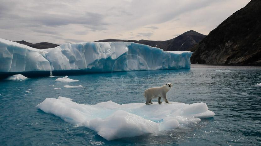 Ours polaires et glaciers sur l'île de Baffin, Expédition en Terre de Baffin, Canada © AK - tous droits réservés