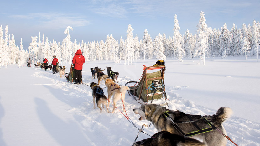 Traîneau à chiens, Activités nordiques, Finlande © Rafael Pérez
