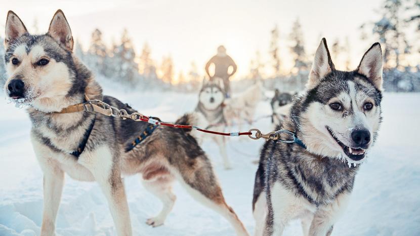 Traîneau à chiens, Hôtel Kakslauttanen, Finlande © Valtteri Hirvonen