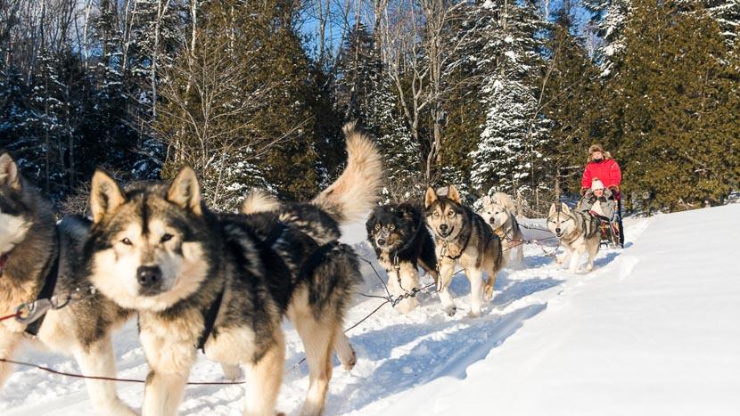 L'hiver au Québec, Traineau à chiens en Sacacomie, Canada © Etienne Boisvert