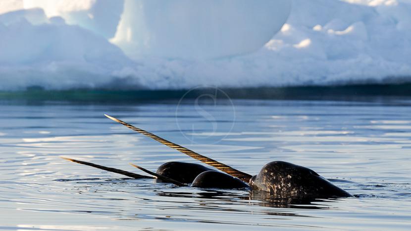 La lisière de la banquise, Expédition en Terre de Baffin, Canada © AK
