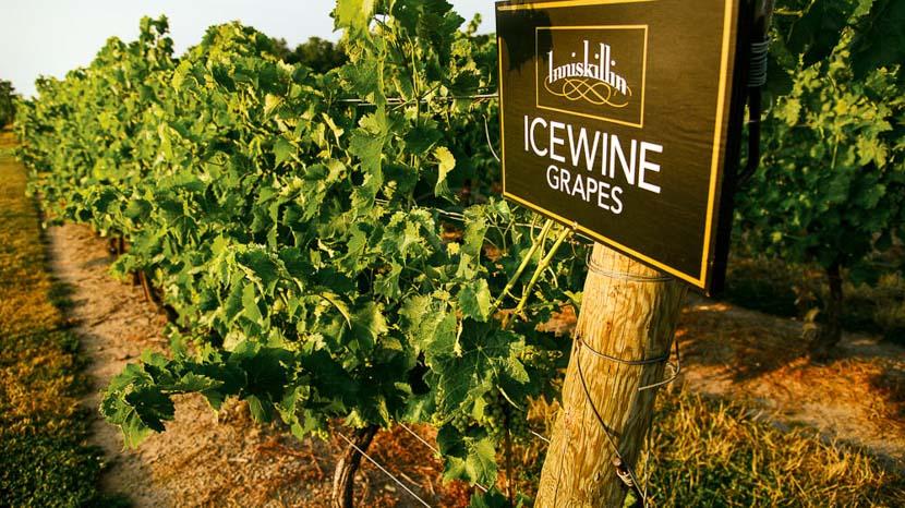 La gastronomie locale, les brasseries et les vignobles, Vignobles dans l'Ontario, Canada