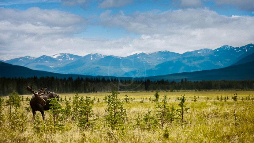 Parc national de Kluane, Kluane National Park, Canada