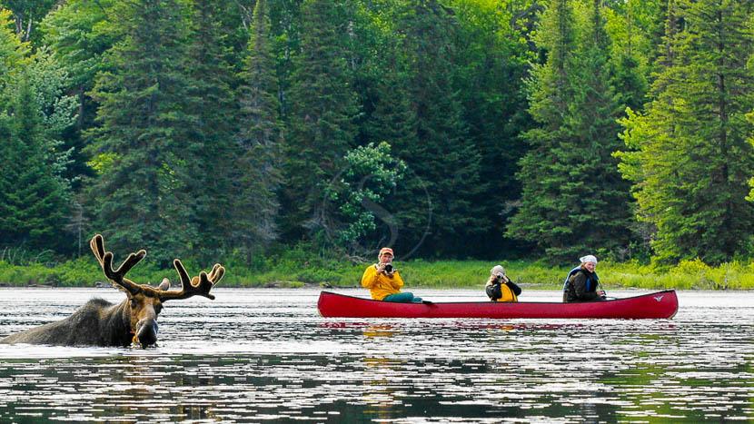 Immersion estivale dans une Pourvoirie, Parc Algonquin, Canada © Destination Canada