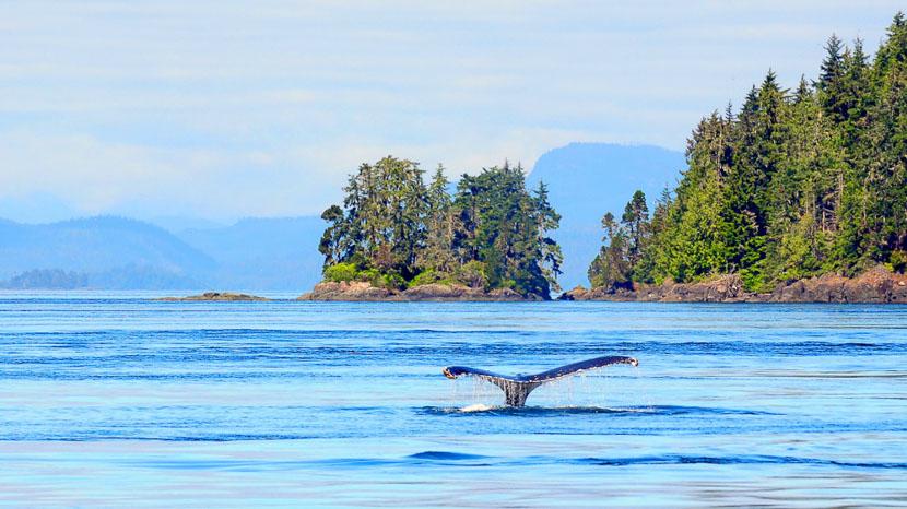 Croisière d'observation des baleines, Ile de Vancouver, Canada