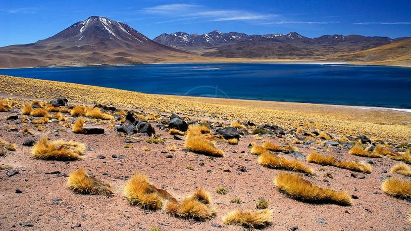 Lagunes altiplaniques, Désert de l'Atacama, Chili © Alain Pons