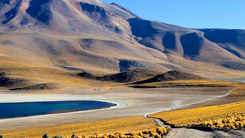 Lagunes altiplaniques, Explora en Atacama