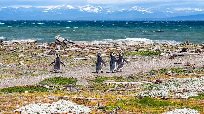 Croisière d'expédition en Patagonie à bord de l'Ultramarine, Isla Magdalena, Détroit de Magellan, Chili