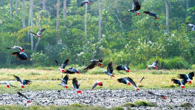 Birdwatching à Odzala,