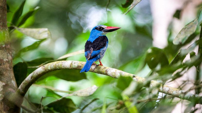 Birdwatching à Odzala, Odzala Discovery Camps © Dana Allen
