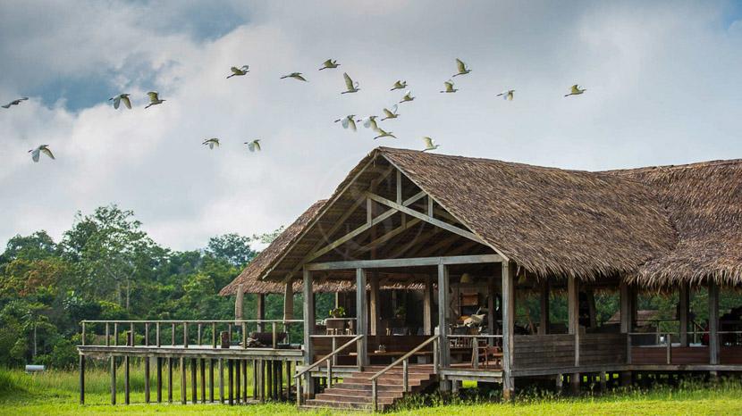 Birdwatching à Odzala, Mboko Camp, Congo